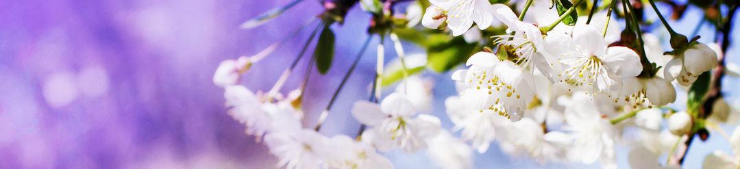 blossom header